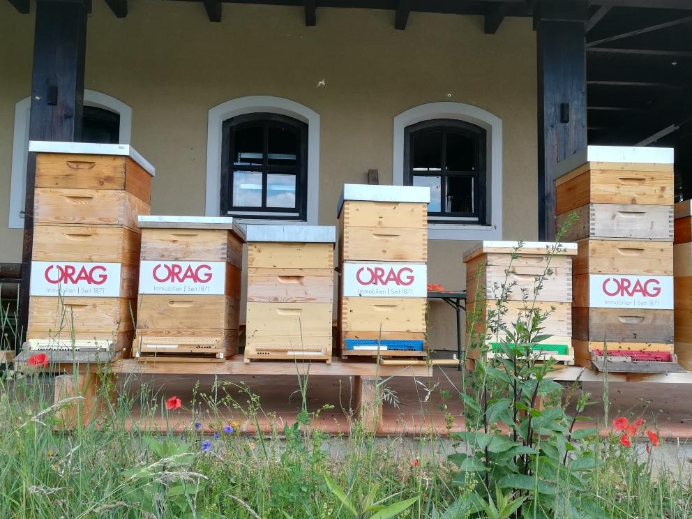 ÖRAG Bienenvölker