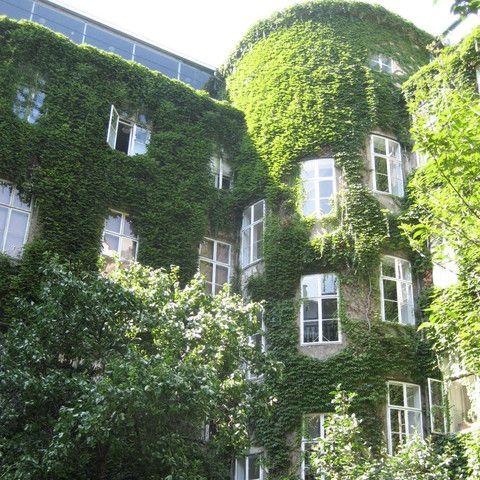 Robertgasse-1-Fassade-Innenhof-3_535.jpg